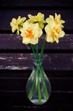 Flowers Narcissus Royalty Free Stock Photos