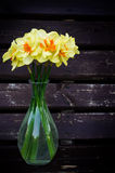Flowers Narcissus Royalty Free Stock Image
