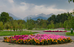 Flowers in National Park of Almaty Royalty Free Stock Photo
