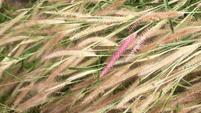 Flowers natural background. Art of grass flowers natural background royalty free stock photo