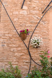 Flowers on natural stone wall Stock Photos