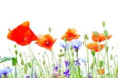 flowers nature background Stock Photo