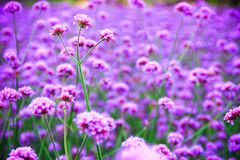 Flowers in nature. Stock Photos