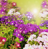 Flowers on nature Stock Photography
