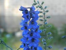 Flowers, nature, garden, field, outdoors, petals, beauty, beautiful, white, yellow Stock Photos