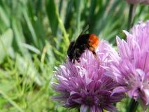 Flowers, nature, garden, field, outdoors, petals, beauty, beautiful, white, yellow Stock Photo