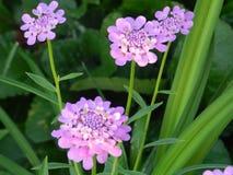 Flowers, nature, garden, field, outdoors, petals, beauty, beautiful, white, yellow Stock Photography
