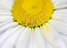 Flowers nature macro flower close-up Royalty Free Stock Photography