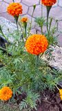Flowers nature nopeople green orange colour. Flower with green Royalty Free Stock Photos