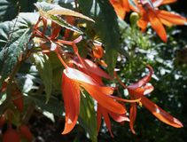 Flowers nature outdoors close-up orange color. Flowers nature outdoors close-up day leaf sunlight orange color garden beauty Stock Photography