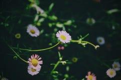 Flowers nature vsco green light Stock Images