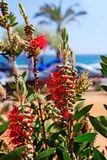 Flowers near beach. Stock Images