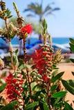 Flowers near beach. Stock Images