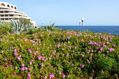The flowers are near beach. Malta island Royalty Free Stock Photography