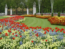Flowers near Buckingham palace Royalty Free Stock Photo