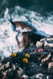 Flowers near the cliff Stock Photos