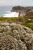 Flowers near the coastline Stock Photos