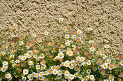 Flowers near the concrete wall Royalty Free Stock Photography