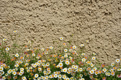 Flowers near the concrete wall Stock Images