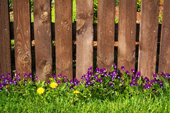 Flowers near a fence Stock Image