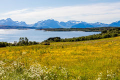 Flowers near a fjord. Royalty Free Stock Photography