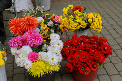Flowers are near a flower shop on a city street. Street flower shop Royalty Free Stock Photo