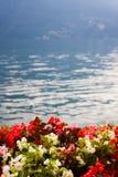 Flowers near the lake stock image