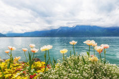 Flowers near lake, Montreux. Switzerland Royalty Free Stock Photography