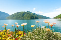 Flowers near lake with swans, Lugano, Switzerland Stock Photo