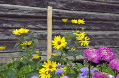 Flowers near old wooden barn wall Stock Photo