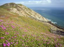 Flowers Near Point Reyes Royalty Free Stock Photo