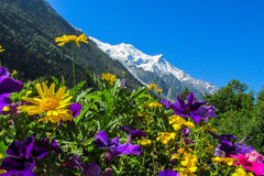 Flowers near the snow mountain Royalty Free Stock Image