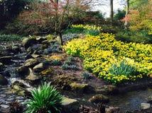 Flowers near waterfall Royalty Free Stock Image