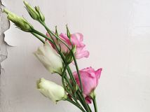 Flowers near white wall Stock Photo