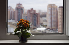 Flowers near window on the windowsill in opposite blur high-rise buildings and sky Royalty Free Stock Image