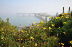 Flowers near a wooden pier over the ocean. Foggy day over the morning ocean with a pier and flowers in the foreground royalty free stock photo