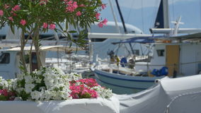 Flowers near yachts stock footage
