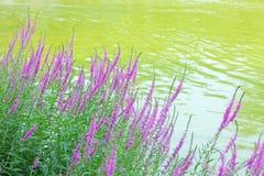 Flowers nearby lake Stock Photos