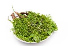 Flowers, neem leaves royalty free stock image