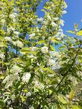 Flowers of New spring. Fliwers flowers new spring life beautiful skt sky perfect royalty free stock image