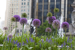 Flowers of new york. Flower in new york at columbus circle Royalty Free Stock Image