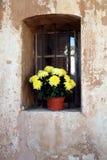 Flowers in niche. Yellow flowers in window niche stock photo