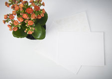 Flowers and note. Gift flowers and note on white background Royalty Free Stock Photography