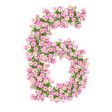 Flowers numbers 6 Royalty Free Stock Images