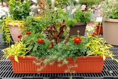 Flowers in Nursery Stock Images