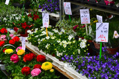 Flowers at Nursery Stock Photography