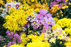 Flowers at the nursery. View from the top royalty free stock photos
