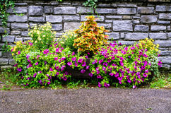 Flowers in Oberstdorf, Germany Stock Images