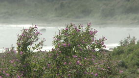 Flowers and ocean stock video
