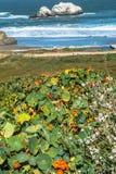 Flowers at Ocean Beach, San Francisco Stock Photography
